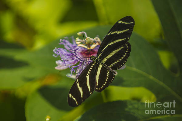 Photograph - Butterfly 1 by Tim Wemple