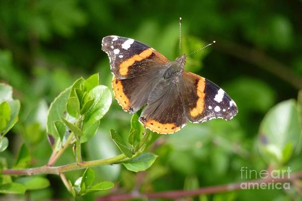 Photograph - Butterfly 10 by Jean Bernard Roussilhe