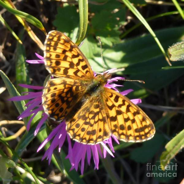 Photograph - Butterfly 11 by Jean Bernard Roussilhe