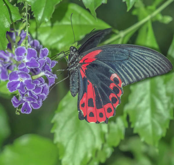Photograph - Butterfly 1200-051818-1cr by Tam Ryan