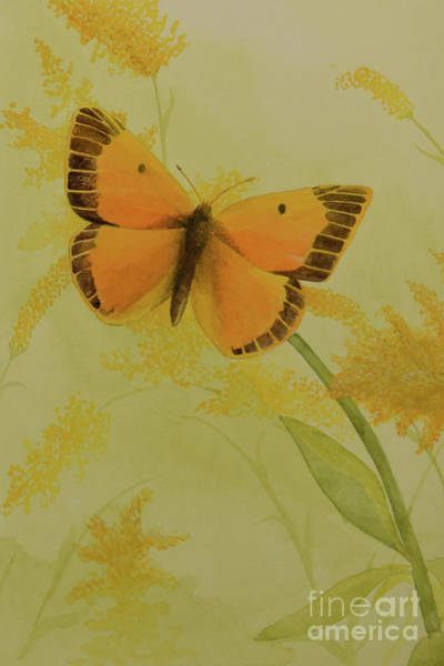Painting - Butterfly 2 by Charles Owens