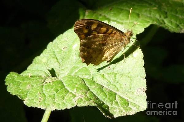 Photograph - Butterfly 2 by Jean Bernard Roussilhe