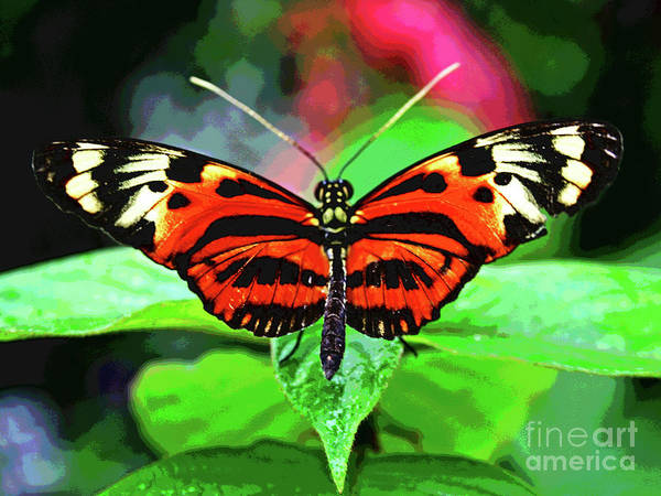 Photograph - Butterfly 2 by Larry Oskin