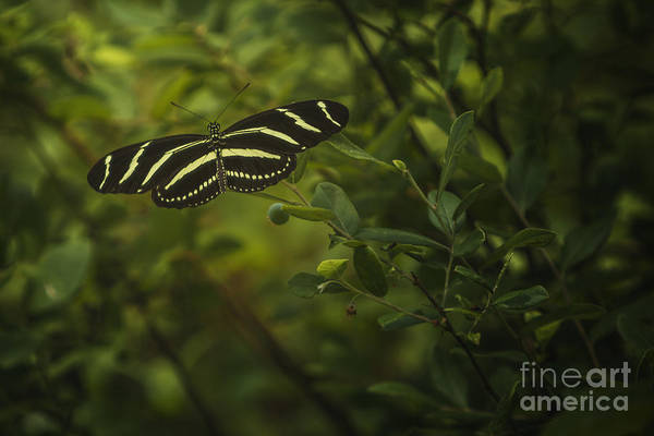 Photograph - Butterfly 2 by Tim Wemple