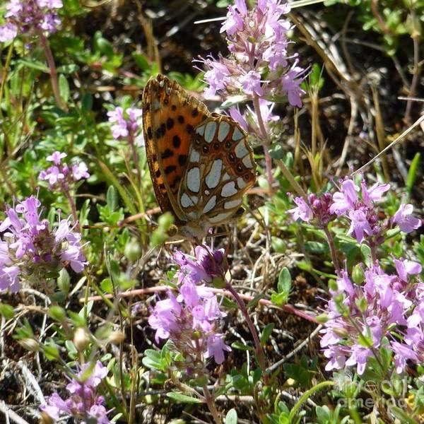 Photograph - Butterfly 3 by Jean Bernard Roussilhe