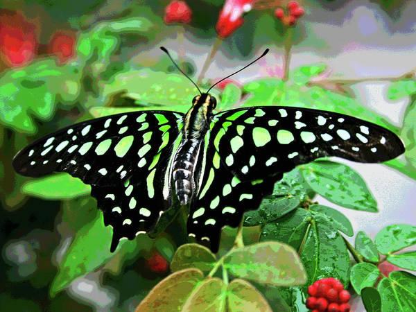 Photograph - Butterfly 3 by Larry Oskin