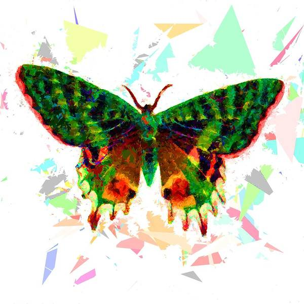Painting - Butterfly 316 by Movie Poster Prints