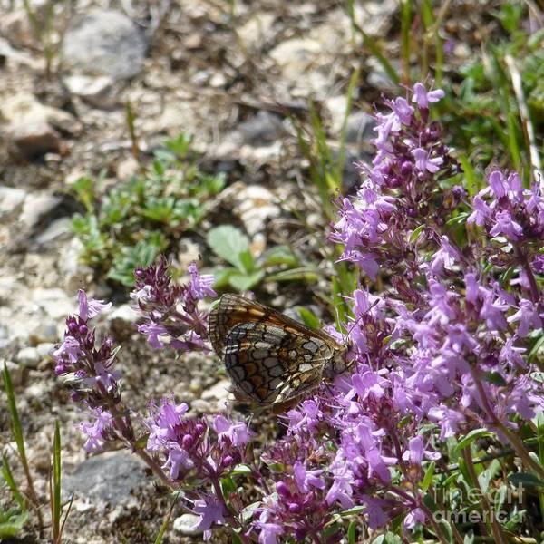 Photograph - Butterfly 5 by Jean Bernard Roussilhe