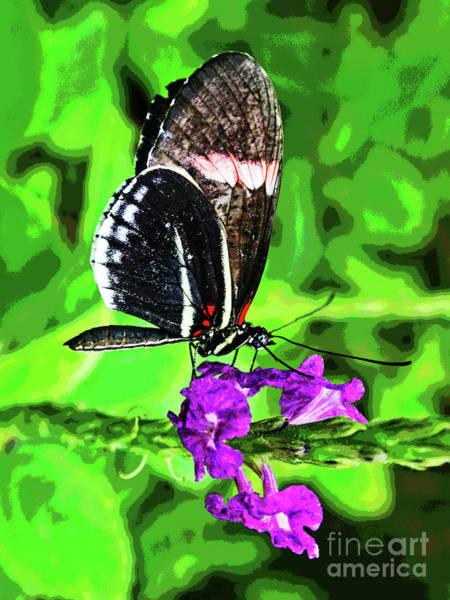 Photograph - Butterfly 5 by Larry Oskin