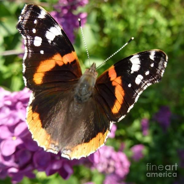 Photograph - Butterfly 6 by Jean Bernard Roussilhe