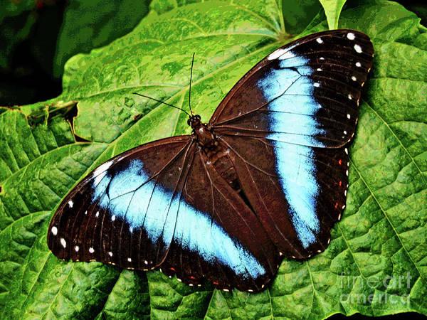 Photograph - Butterfly 6 by Larry Oskin