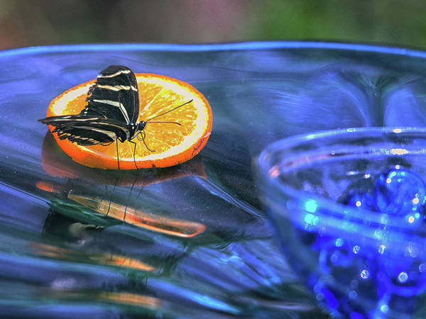 Photograph - Butterfly 6316 by Tam Ryan