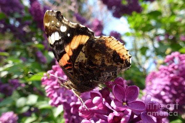Photograph - Butterfly 7 by Jean Bernard Roussilhe