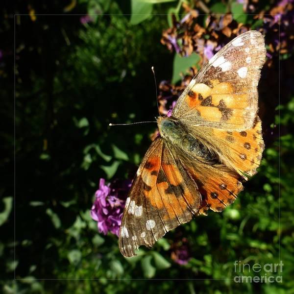 Photograph - Butterfly 8 by Jean Bernard Roussilhe