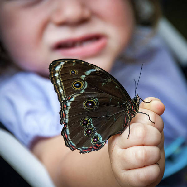 Photograph - Butterfly A Helping Hand by Ron White