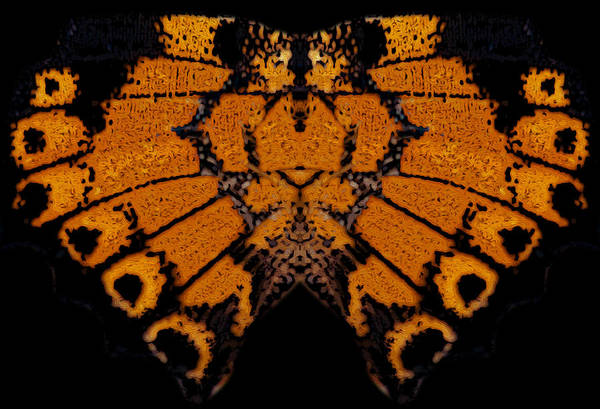 Photograph - Butterfly Abstract by Jeff Phillippi