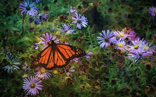 Photograph - Butterfly And Aster 5626 Dp_2 by Steven Ward