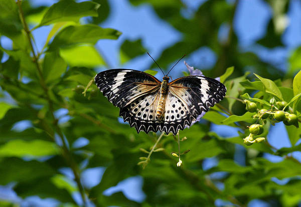 Photograph - Butterfly And Blue Sky by Sandy Keeton