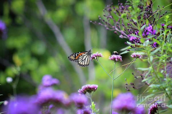Photograph - Butterfly And Bumblebee Buddies by Karen Adams