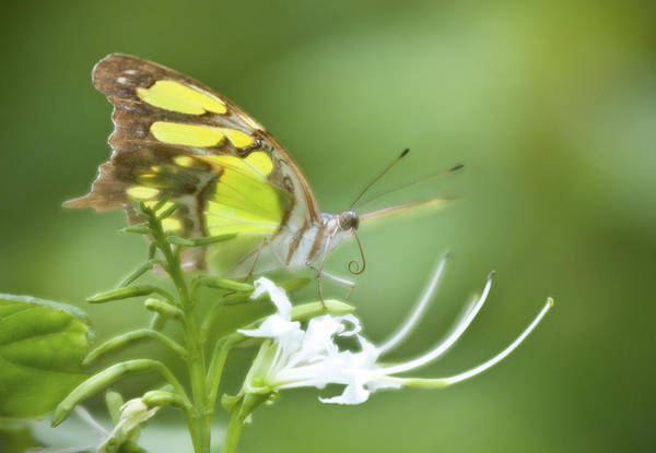 Photograph - Butterfly And Flower by Steven Sparks