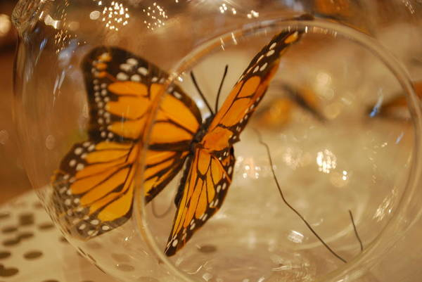 Photograph - Butterfly And Glass by Emily Page