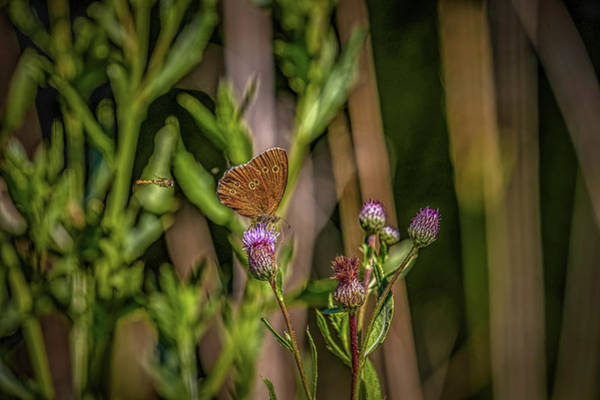 Photograph - Butterfly And Hoverfly  #h8 by Leif Sohlman