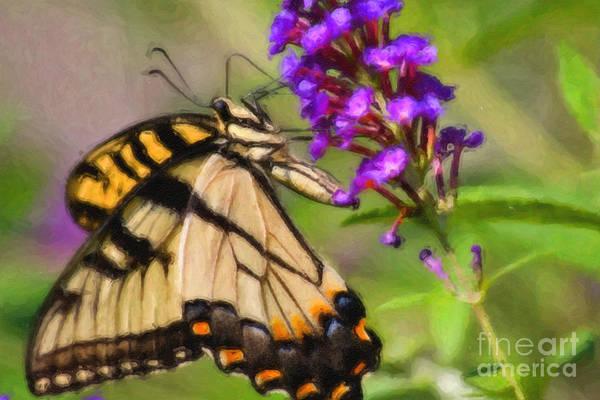 Digital Art - Butterfly Art by Jill Lang