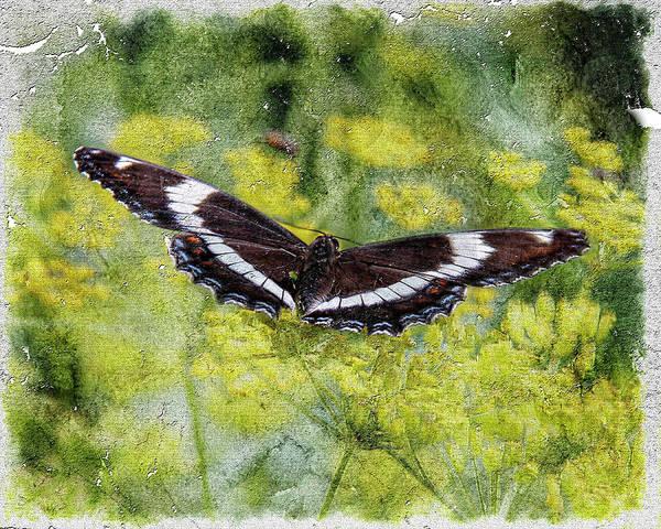 Digital Art - Butterfly  Art by Rusty R Smith