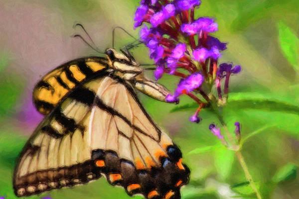 Photograph - Butterfly Artwork by Jill Lang