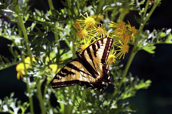 Photograph - Butterfly At Wilson Creek #4 by Ben Upham III