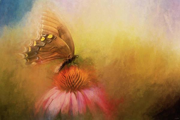 Photograph - Butterfly Beaute by Jai Johnson