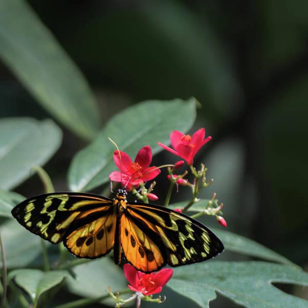 Photograph - Butterfly Beauty by Stewart Helberg