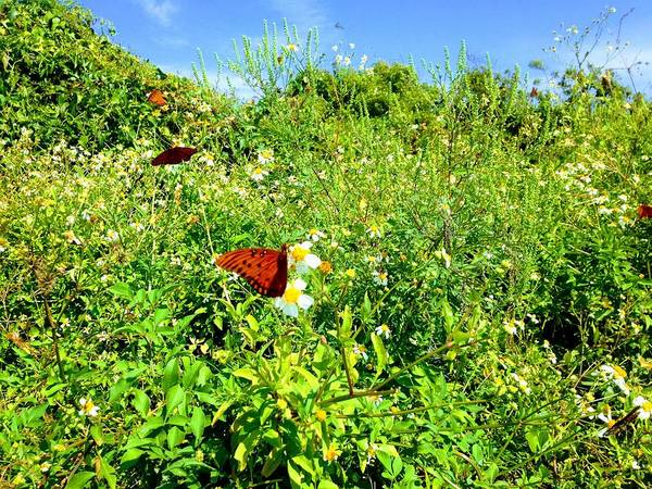 Photograph - Butterfly Bonanza by Sherry Kuhlkin