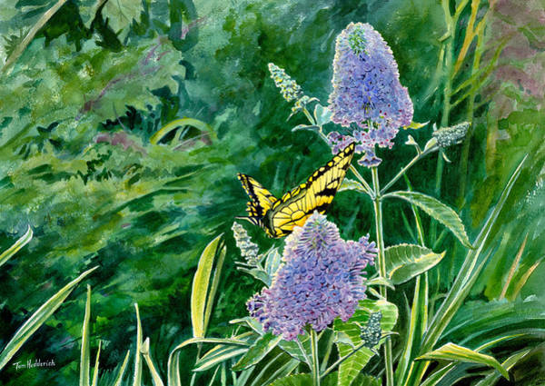 Wall Art - Painting - Butterfly Bush by Tom Hedderich