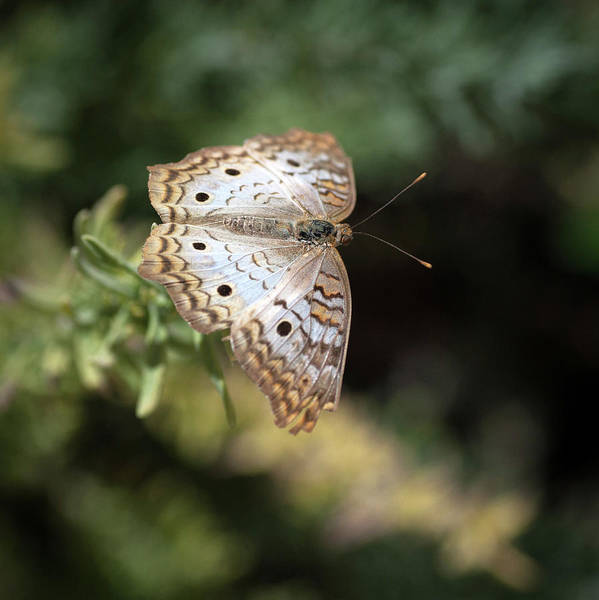 Wall Art - Photograph - Butterfly by Catherine Lau