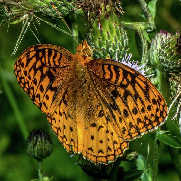 Wall Art - Photograph - Butterfly Close Up by Paul Freidlund