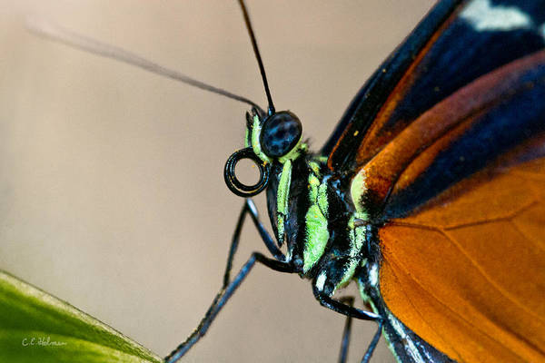 Photograph - Butterfly Closeup by Christopher Holmes
