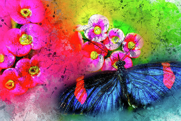 Photograph - Butterfly Color Explosion by Kay Brewer