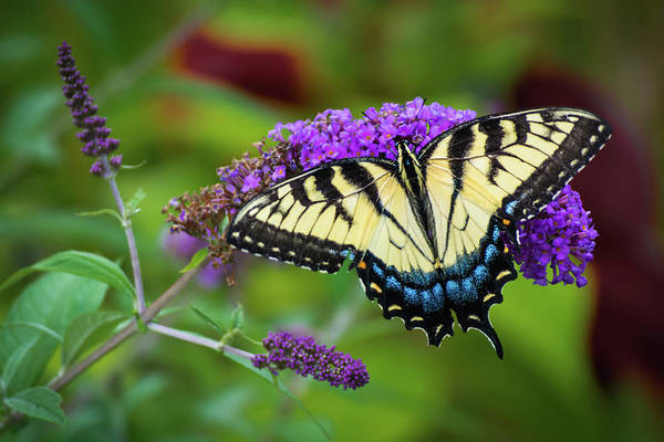Photograph - Butterfly Color by Stewart Helberg