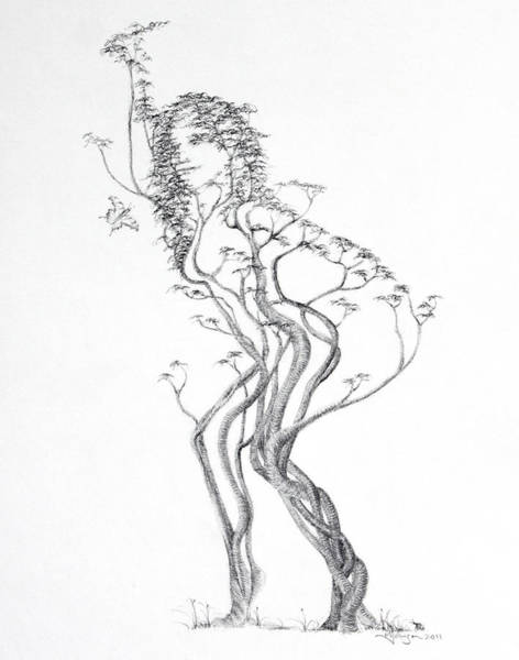 Wall Art - Drawing - Butterfly Dancer by Mark Johnson