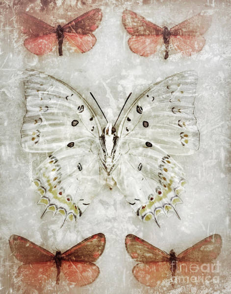 Photograph - Butterfly Dream by Chris Scroggins