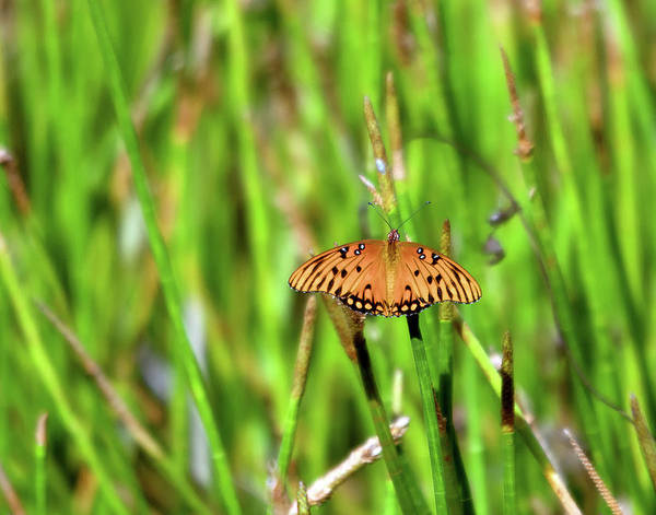 Photograph - Butterfly Dream by Karl Ford