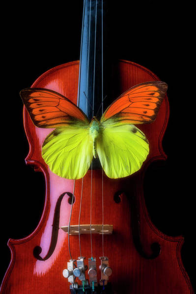 Photograph - Butterfly Dreaming On A Violin by Garry Gay