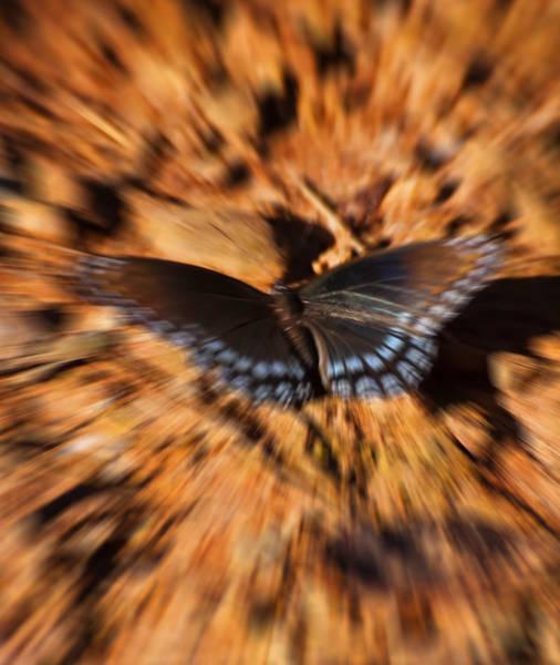 Digital Art - Butterfly Dreams by Chris Flees