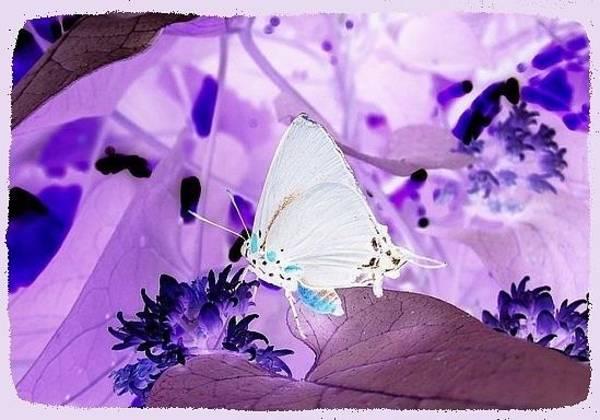 Groovy Mixed Media - Butterfly Dreams by Mary Ellen Frazee