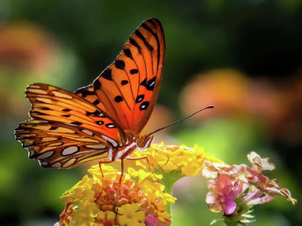 Wall Art - Photograph - Butterfly Fascination by Karen Wiles