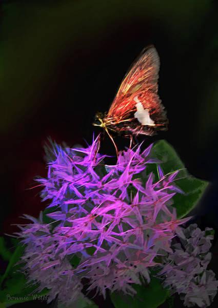 Digital Art - Butterfly Feast by Bonnie Willis