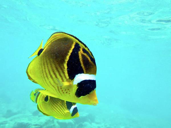 Hawaiian Fish Photograph - Butterfly Fish by Christopher Johnson