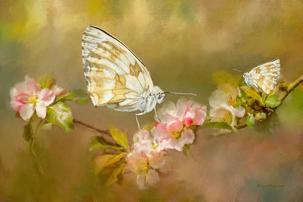 Photograph - Butterfly Floral 014 by Ericamaxine Price