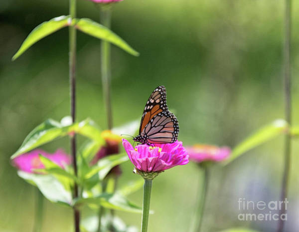Wall Art - Photograph - Butterfly Flower by Noel Adams
